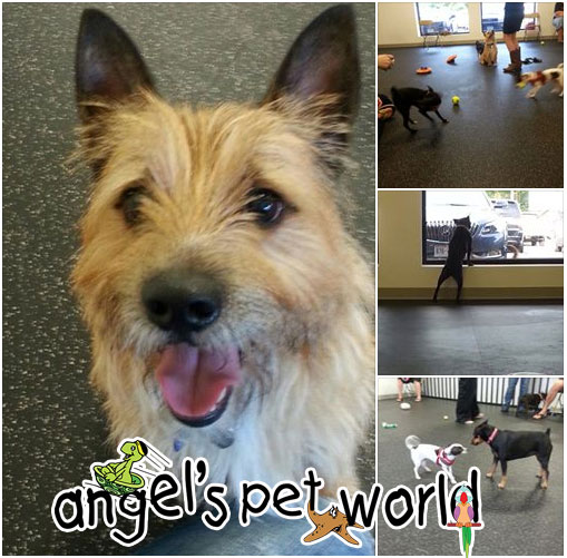 CaninePlayGroups_AngelsPetWorld
