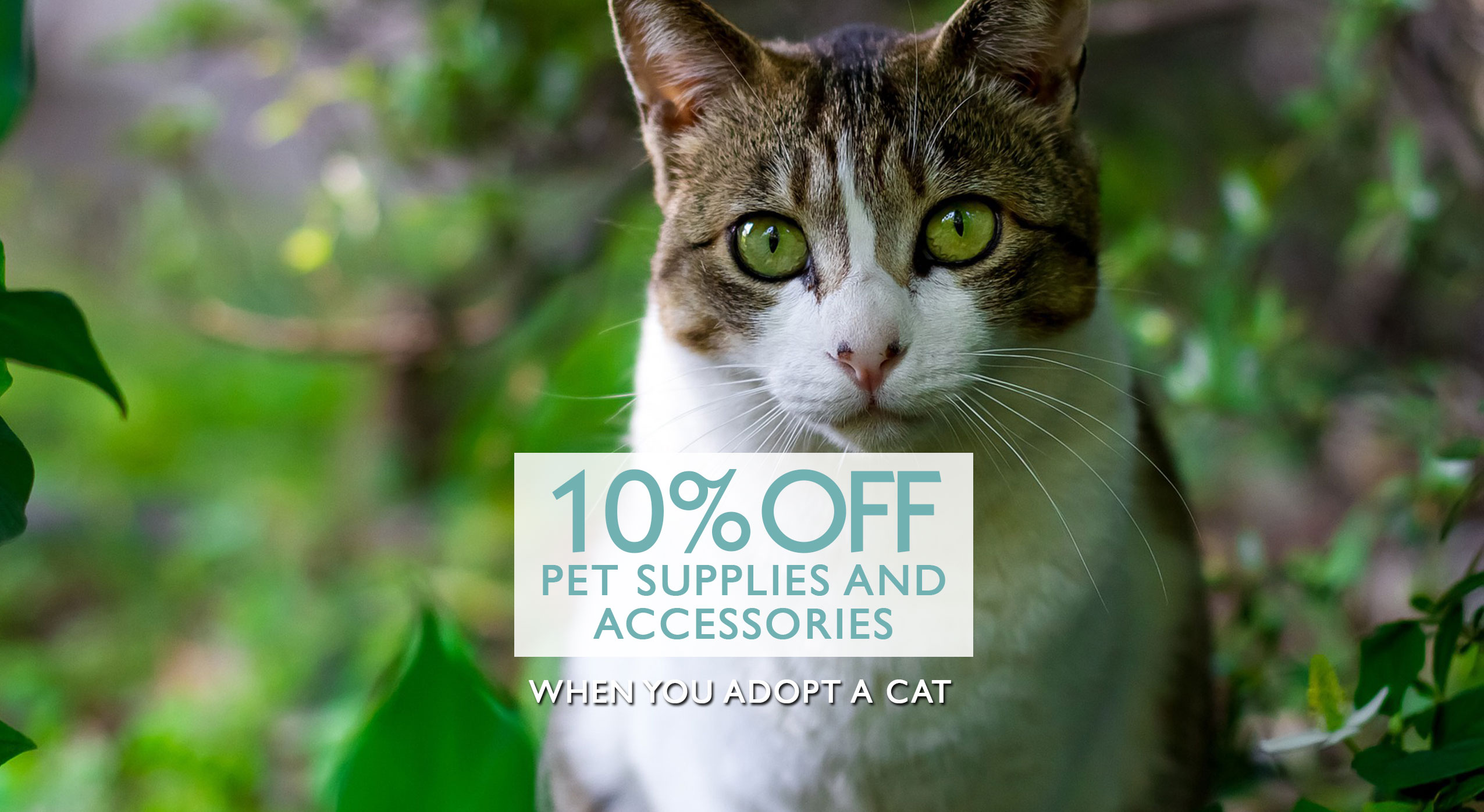 Adopt a Cat and Receive 10% off any Pet Supplies and Accessories