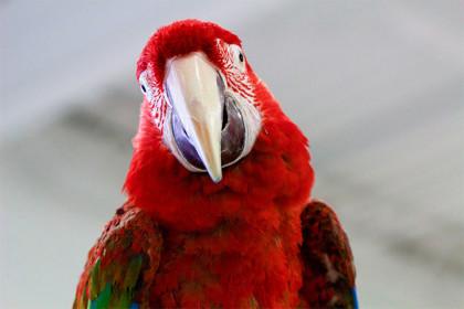 angels-pet-world-big-bird