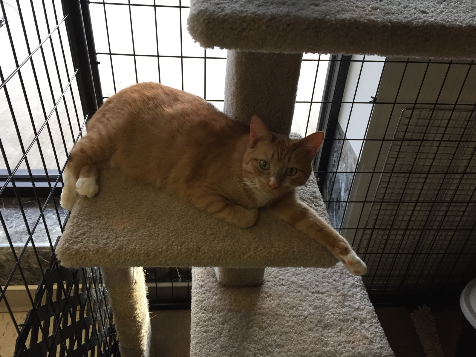 Cat-adoption-hudson-angels-pet-world-pet-supply