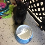 adopt-cat-Cat-adoption-hudson-angels-pet-world-pet-supply