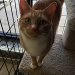 cat-Cat-adoption-hudson-angels-pet-world-pet-supply