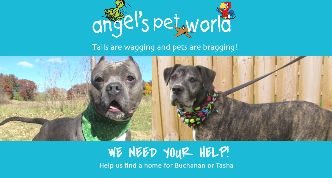 adopt-dunn-county-humane-society-dog-food-pet-supply-angels-pet-world