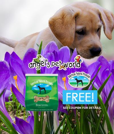Buy American Natural Premium Dog Food Online