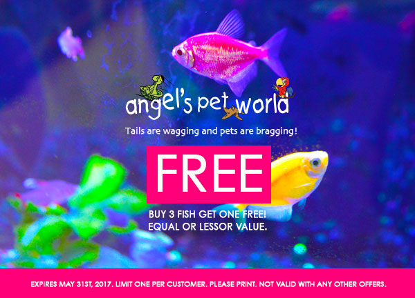 hudson-fish-food-buy-fish-pet-supply-hudson-angels-pet-world