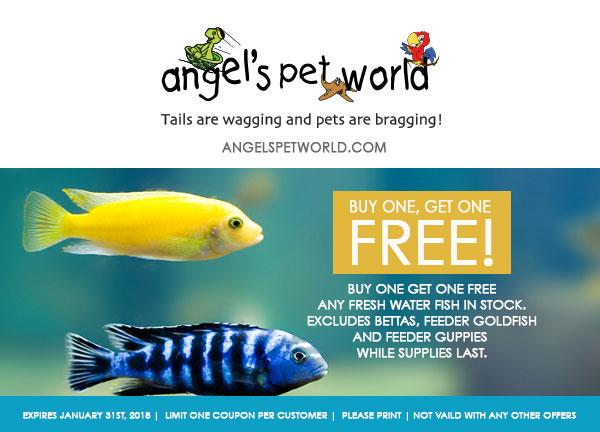 Fresh-Water-Fish-Angels-pet-world-pet-supply-hudson