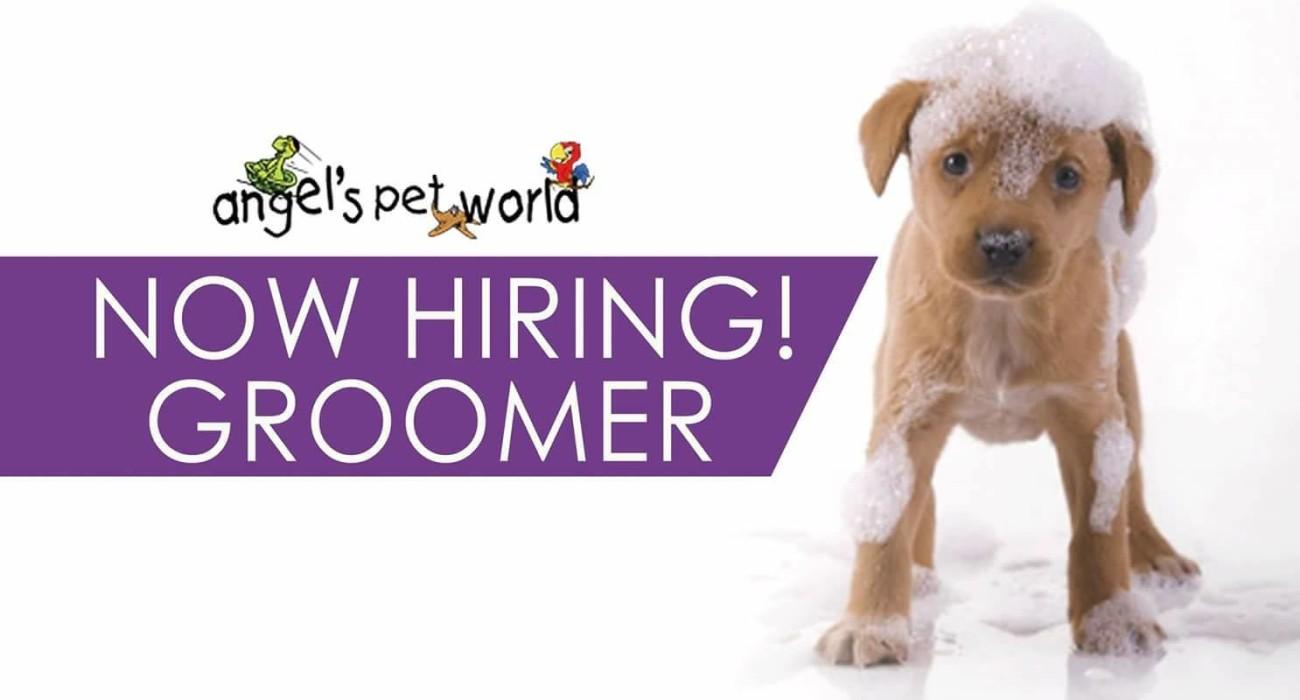 Now Hiring! Groomer - Angel's Pet World in Hudson